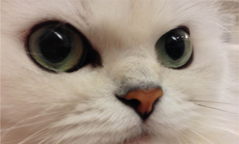 うちの猫にもメタデータ